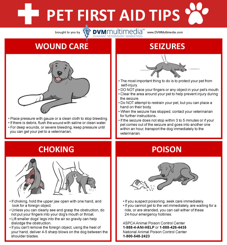 Pet First Aid - Lund Animal Hospital - Boca Raton, FL