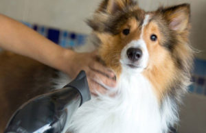 Pet Grooming - Boca Raton, FL - Lund Animal Hospital