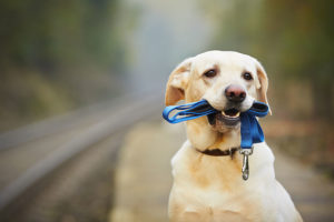 Dog Training Services - Lund Animal Hospital - Boca Raton