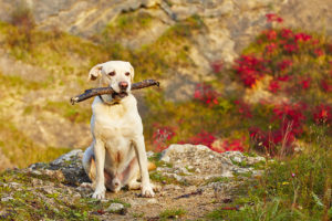 Pet First Aid Tips To Help Keep Your Pet Healthy And Safe - Lund Animal Hospital - Boca Raton, FL