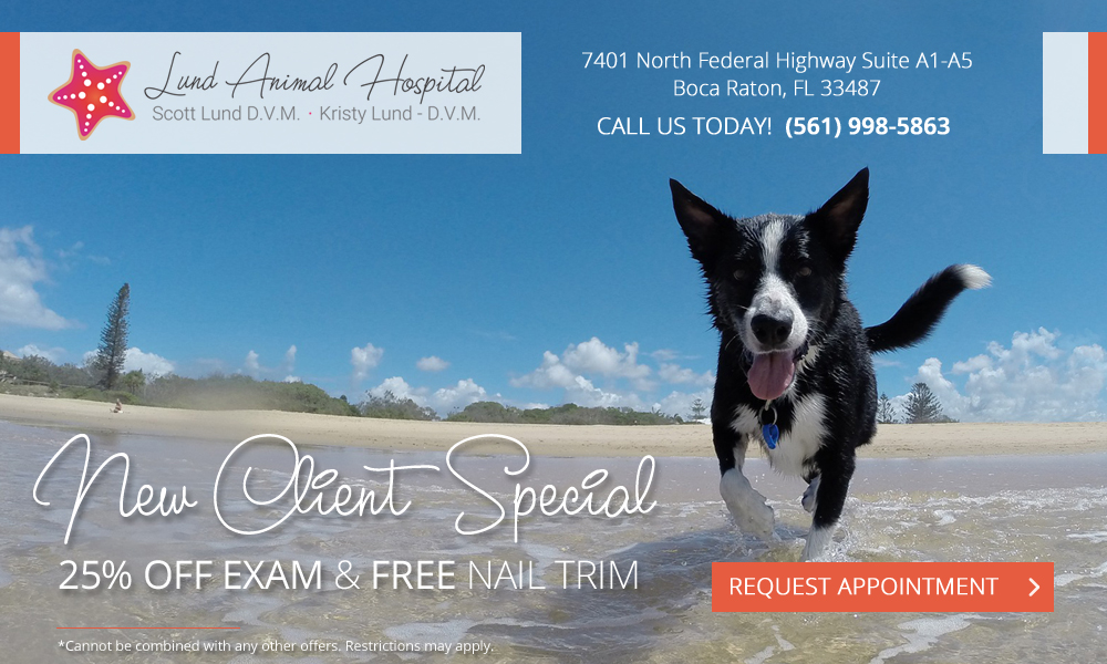 Lund Animal Hospital - Boca Raton, FL