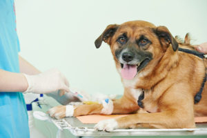 Pet Surgery Services - Veterinary Surgeons Boca Raton, FL